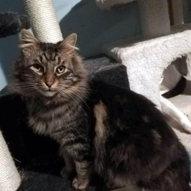 Katzen Aus Bulgarien